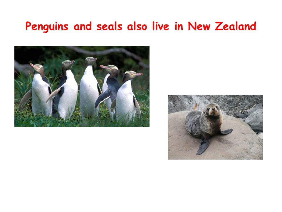 Penguins and seals also live in New Zealand