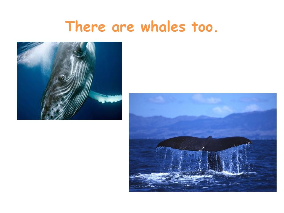 There are whales too.