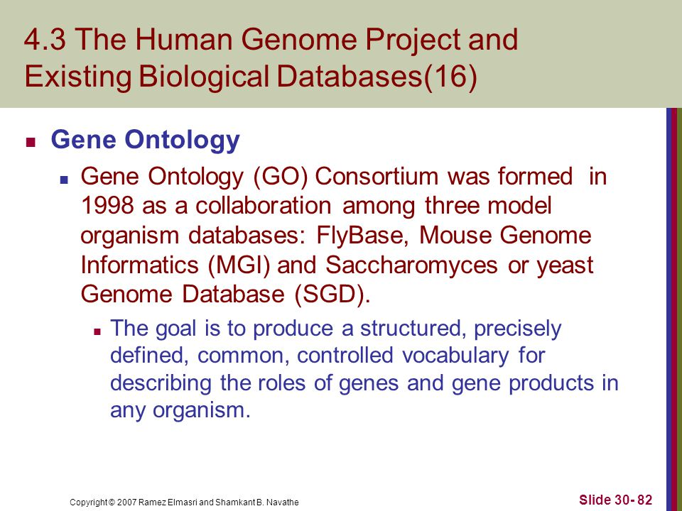 Copyright © 2007 Ramez Elmasri and Shamkant B. Navathe Slide 30- 82 4.3 The Human Genome Project and Existing Biological Databases(16) Gene Ontology G