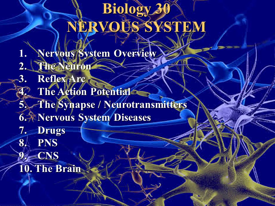 Biology 30 NERVOUS SYSTEM Nervous System Overview 1. Nervous System Overview 2. The Neuron 3. Reflex Arc 4. The Action Potential 5. The Synapse / Neur
