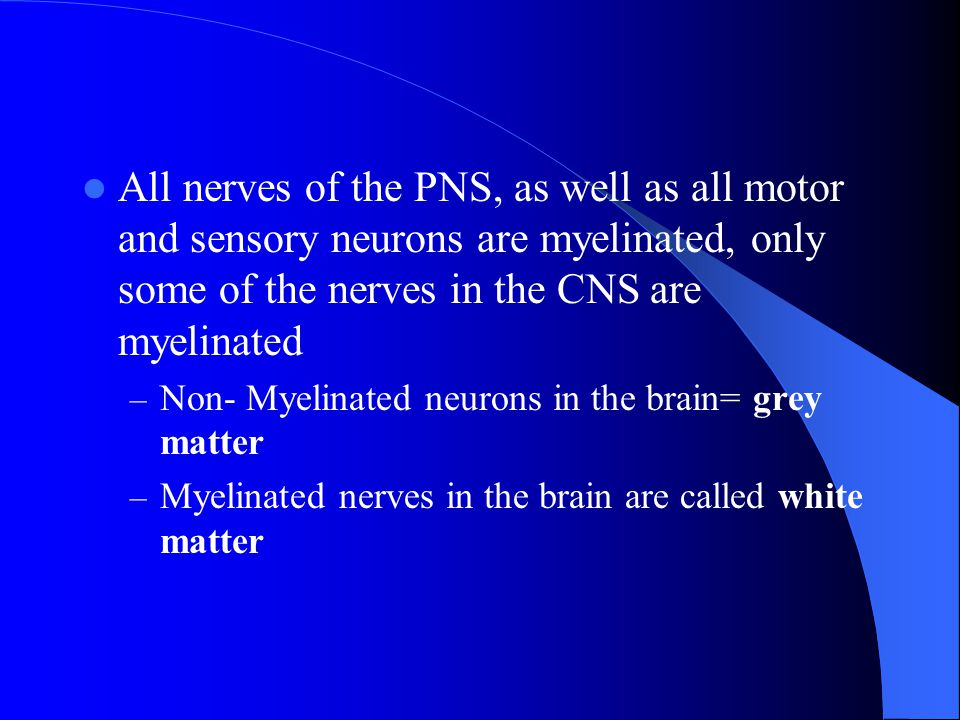 All nerves of the PNS, as well as all motor and sensory neurons are myelinated, only some of the nerves in the CNS are myelinated – Non- Myelinated ne