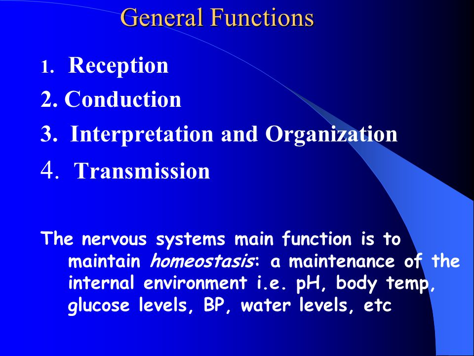 Nerves Individual neurons are organized into tissues called nerves.