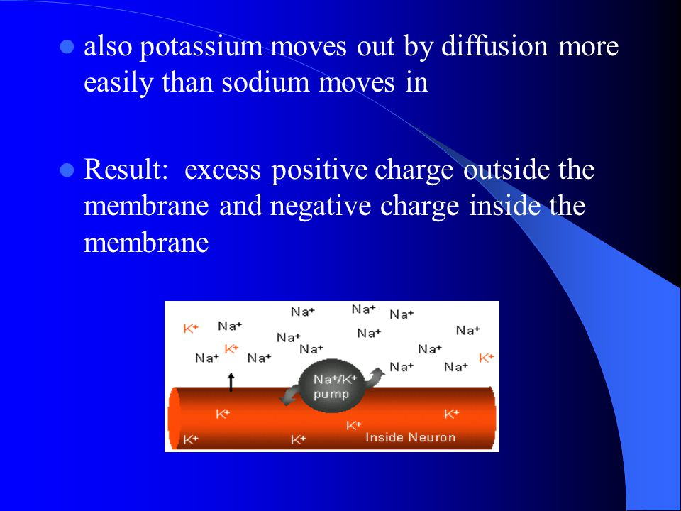also potassium moves out by diffusion more easily than sodium moves in Result: excess positive charge outside the membrane and negative charge inside
