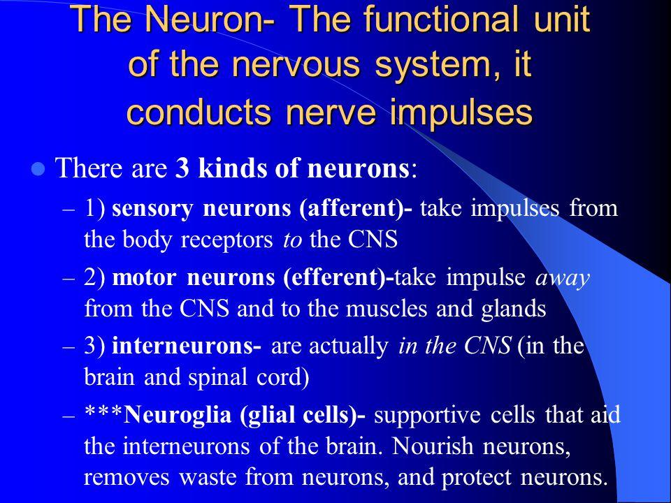 Neurotransmitters 1.