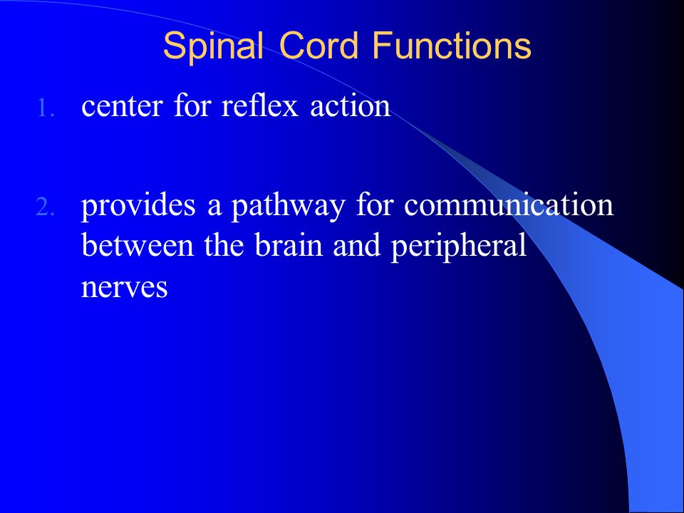 Spinal Cord Functions 1. center for reflex action 2. provides a pathway for communication between the brain and peripheral nerves