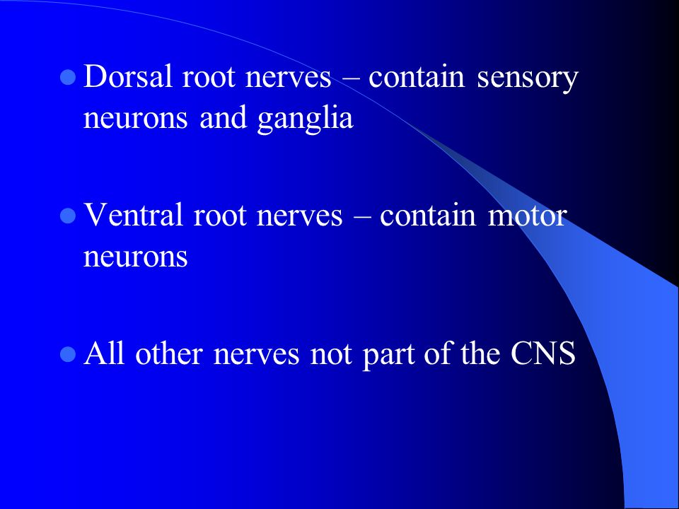 Dorsal root nerves – contain sensory neurons and ganglia Ventral root nerves – contain motor neurons All other nerves not part of the CNS