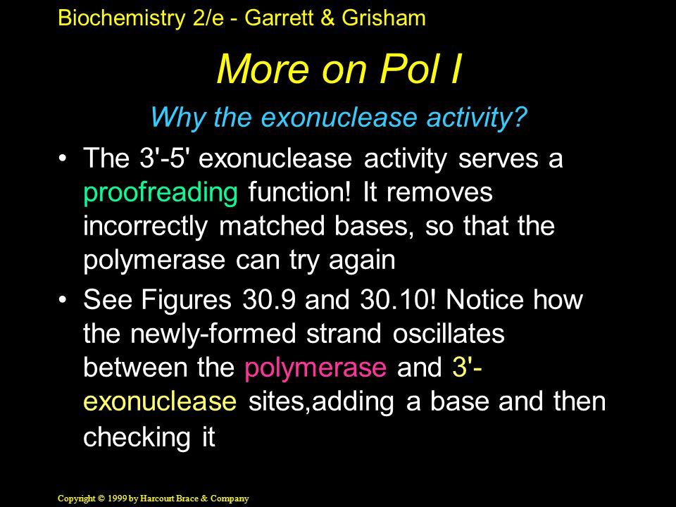 Biochemistry 2/e - Garrett & Grisham Copyright © 1999 by Harcourt Brace & Company More on Pol I Why the exonuclease activity.