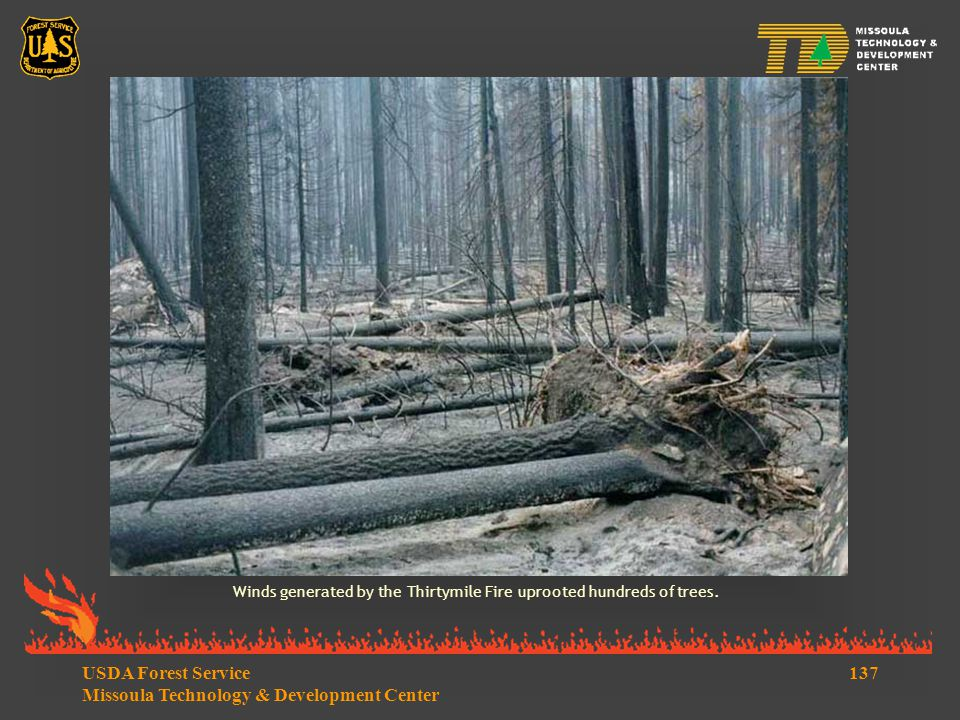 137USDA Forest Service Missoula Technology & Development Center Winds generated by the Thirtymile Fire uprooted hundreds of trees.