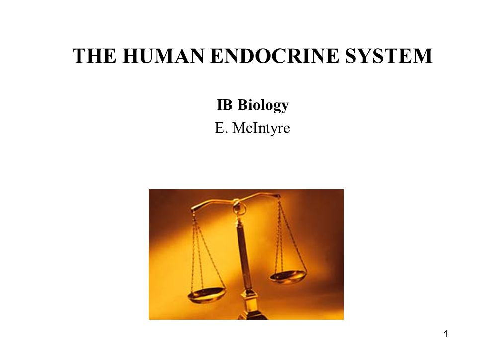 1 THE HUMAN ENDOCRINE SYSTEM IB Biology E. McIntyre