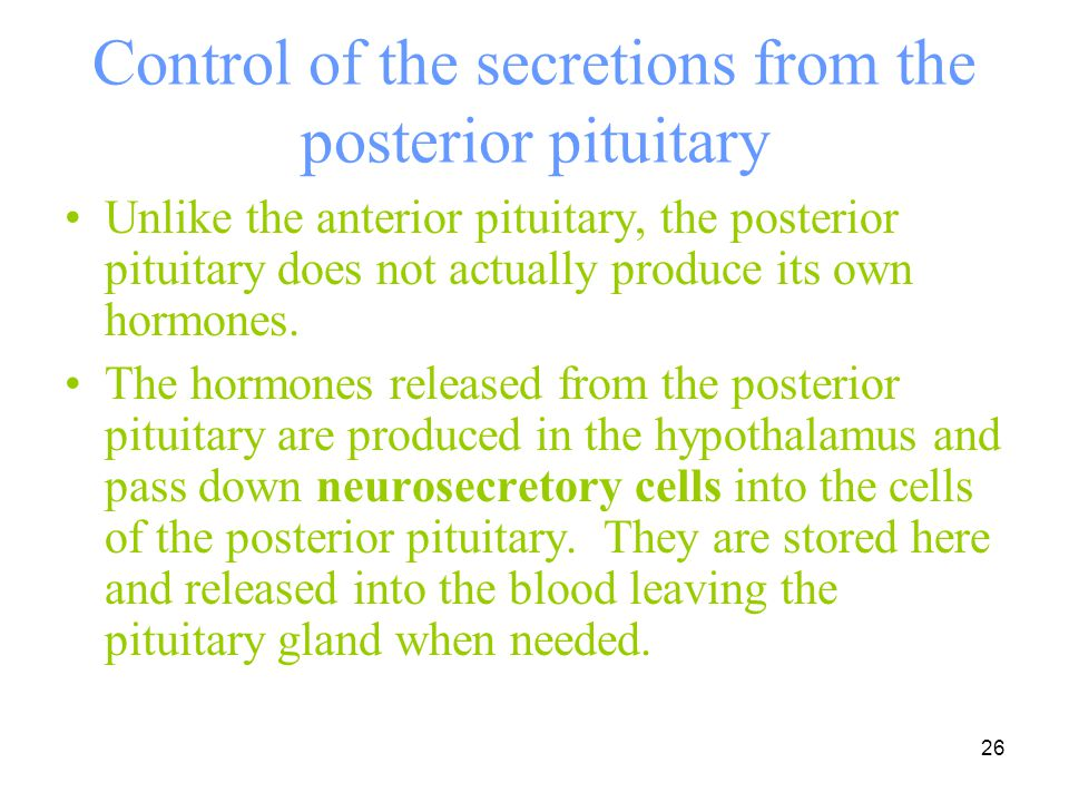 26 Control of the secretions from the posterior pituitary Unlike the anterior pituitary, the posterior pituitary does not actually produce its own hor
