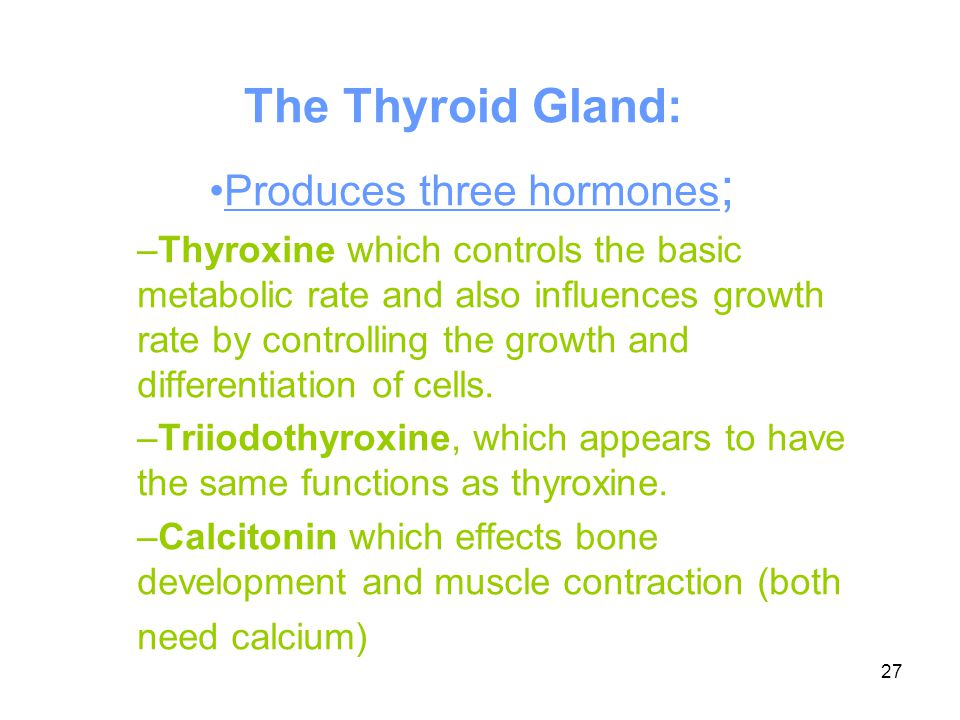27 The Thyroid Gland: Produces three hormones ; –Thyroxine which controls the basic metabolic rate and also influences growth rate by controlling the