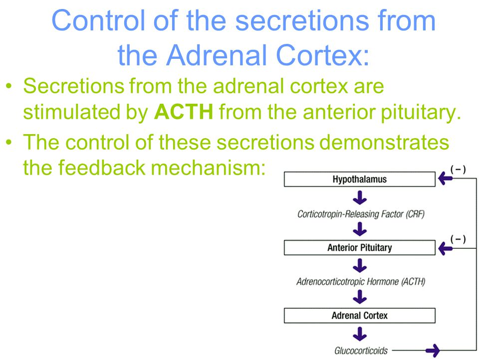 46 Control of the secretions from the Adrenal Cortex: Secretions from the adrenal cortex are stimulated by ACTH from the anterior pituitary. The contr