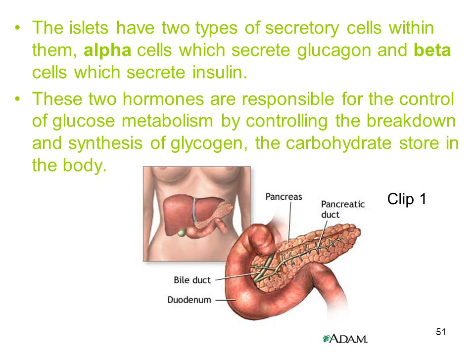 51 The islets have two types of secretory cells within them, alpha cells which secrete glucagon and beta cells which secrete insulin. These two hormon