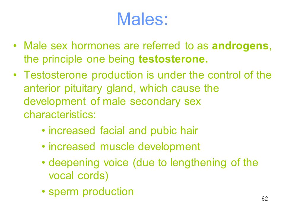62 Males: Male sex hormones are referred to as androgens, the principle one being testosterone. Testosterone production is under the control of the an
