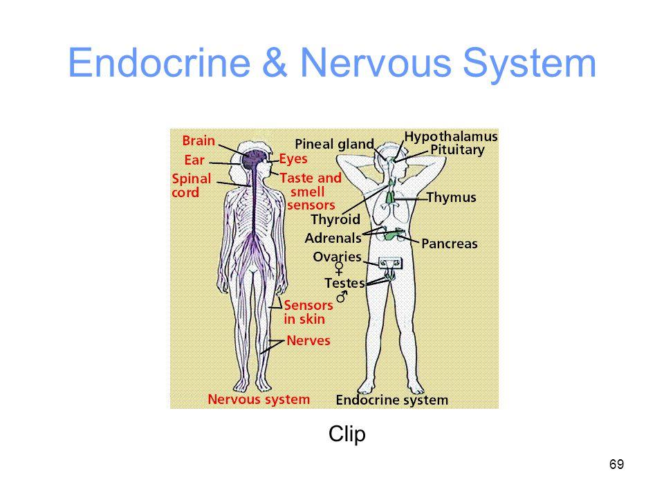 69 Endocrine & Nervous System Clip