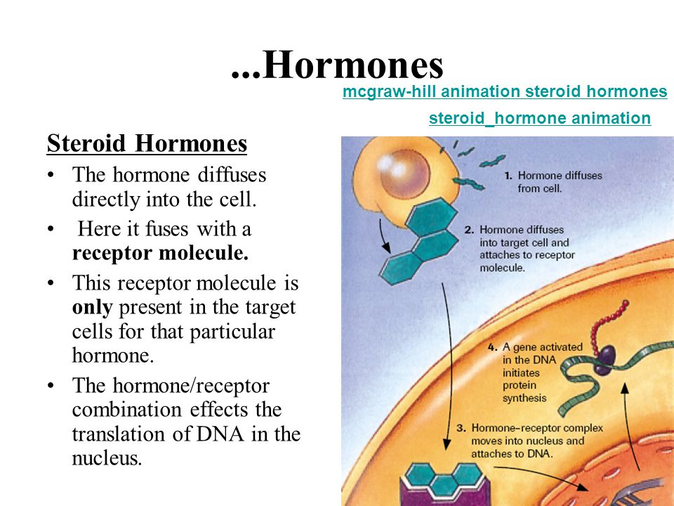 9...Hormones Steroid Hormones The hormone diffuses directly into the cell. Here it fuses with a receptor molecule. This receptor molecule is only pres
