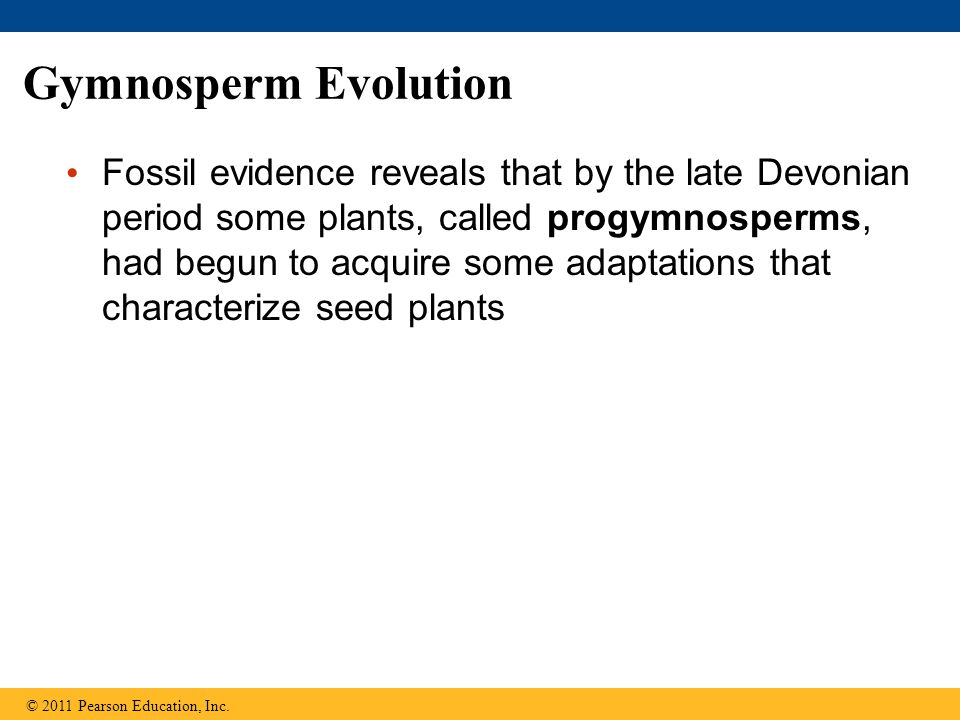 Gymnosperm Evolution Fossil evidence reveals that by the late Devonian period some plants, called progymnosperms, had begun to acquire some adaptation