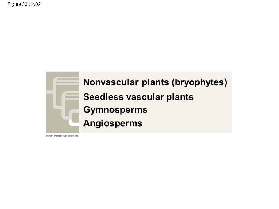 Figure 30.UN02 Nonvascular plants (bryophytes) Seedless vascular plants Gymnosperms Angiosperms