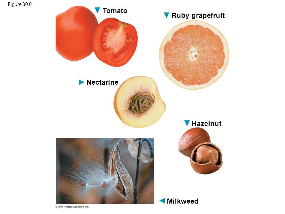 Tomato Ruby grapefruit Hazelnut Nectarine Milkweed Figure 30.8