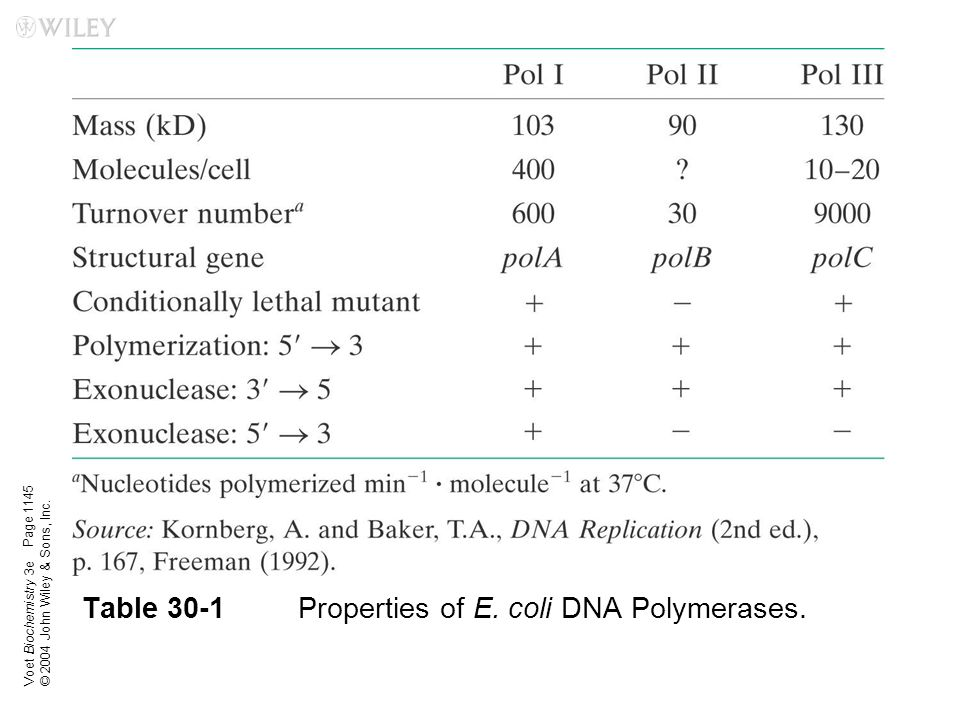 Voet Biochemistry 3e © 2004 John Wiley & Sons, Inc. Table 30-1Properties of E. coli DNA Polymerases. Page 1145