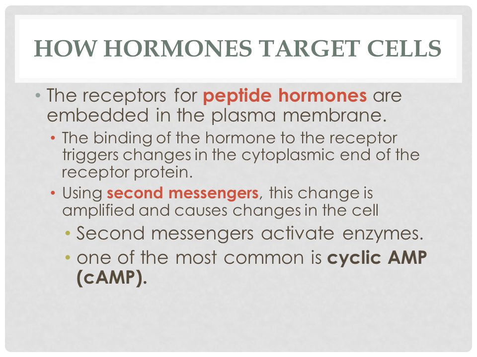 HOW HORMONES TARGET CELLS The receptors for peptide hormones are embedded in the plasma membrane. The binding of the hormone to the receptor triggers
