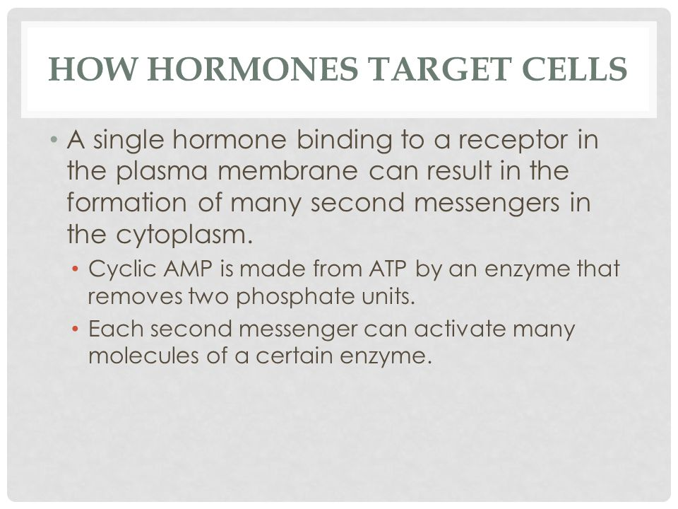 HOW HORMONES TARGET CELLS A single hormone binding to a receptor in the plasma membrane can result in the formation of many second messengers in the c