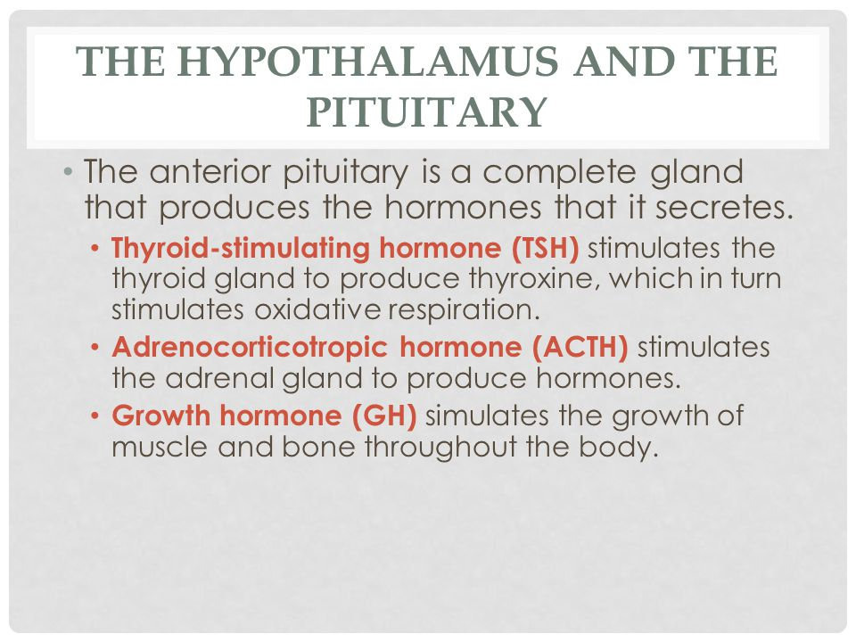 THE HYPOTHALAMUS AND THE PITUITARY The anterior pituitary is a complete gland that produces the hormones that it secretes. Thyroid-stimulating hormone