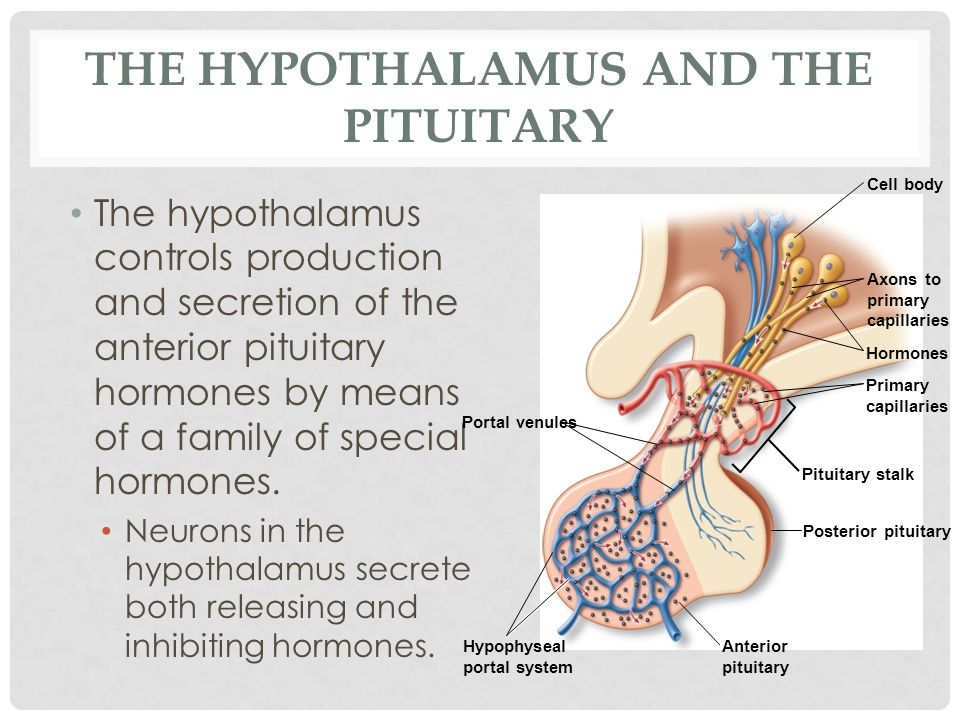 THE HYPOTHALAMUS AND THE PITUITARY The hypothalamus controls production and secretion of the anterior pituitary hormones by means of a family of speci