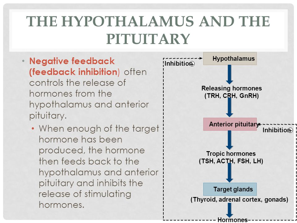 THE HYPOTHALAMUS AND THE PITUITARY Negative feedback (feedback inhibition ) often controls the release of hormones from the hypothalamus and anterior