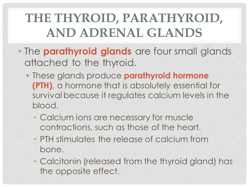 THE THYROID, PARATHYROID, AND ADRENAL GLANDS The parathyroid glands are four small glands attached to the thyroid. These glands produce parathyroid ho