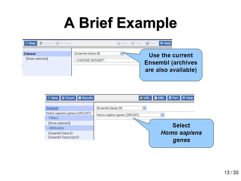 13 / 30 A Brief Example Use the current Ensembl (archives are also available) Select Homo sapiens genes