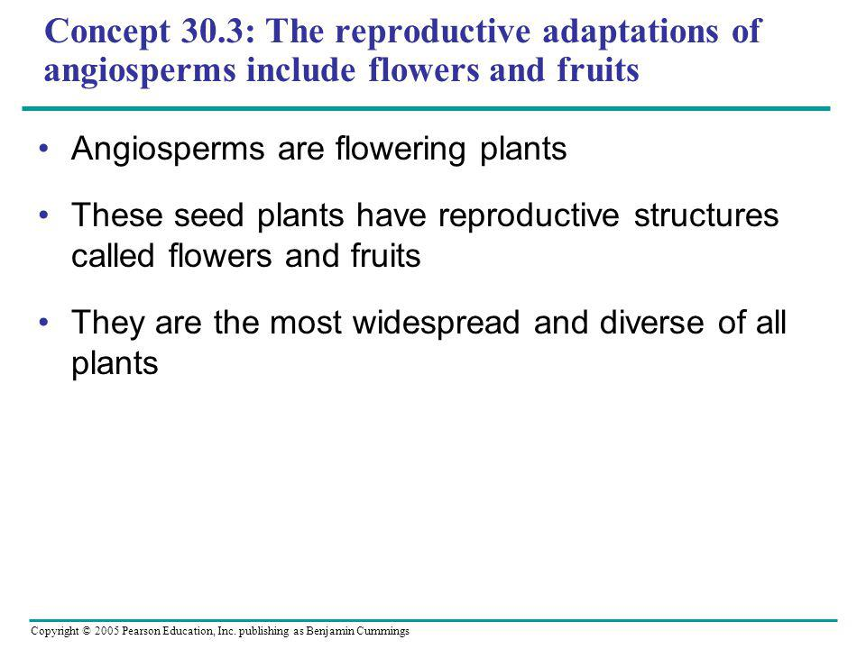 Copyright © 2005 Pearson Education, Inc. publishing as Benjamin Cummings Concept 30.3: The reproductive adaptations of angiosperms include flowers and