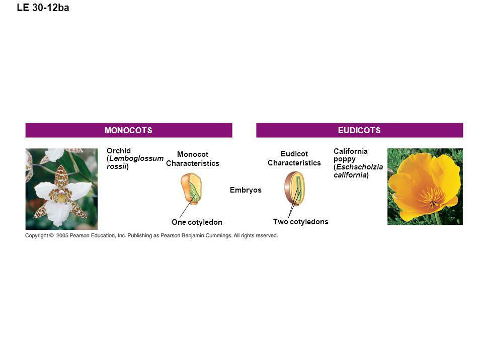 LE 30-12ba Orchid (Lemboglossum rossii) Monocot Characteristics One cotyledon Embryos Two cotyledons Eudicot Characteristics California poppy (Eschscholzia california) EUDICOTSMONOCOTS