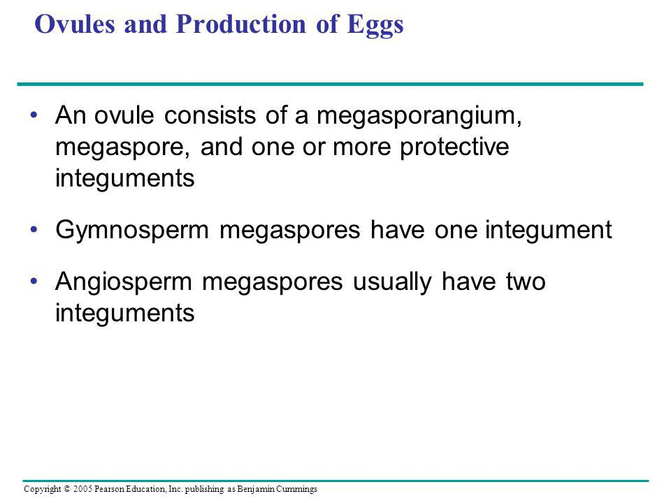 Copyright © 2005 Pearson Education, Inc. publishing as Benjamin Cummings Ovules and Production of Eggs An ovule consists of a megasporangium, megaspor
