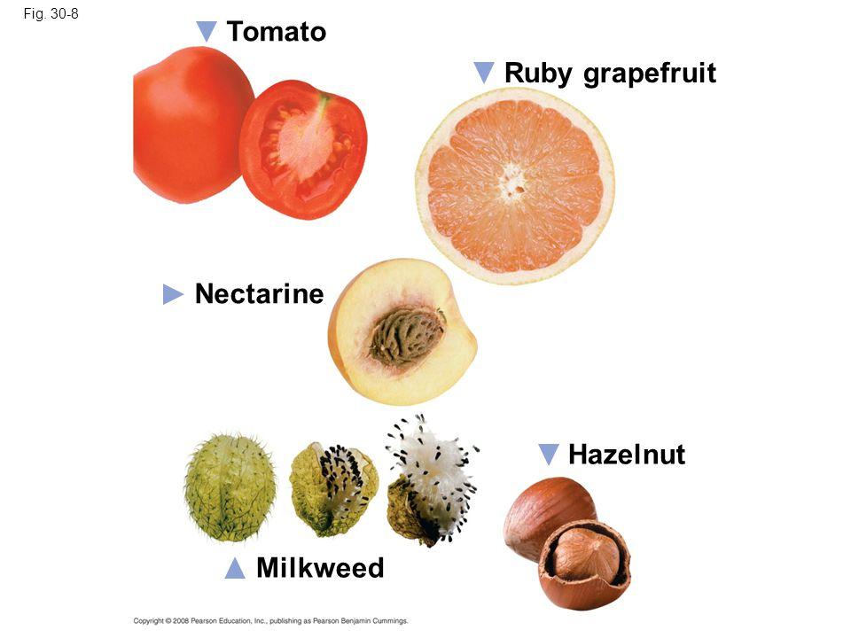 Fig. 30-8 Hazelnut Ruby grapefruit Tomato Nectarine Milkweed