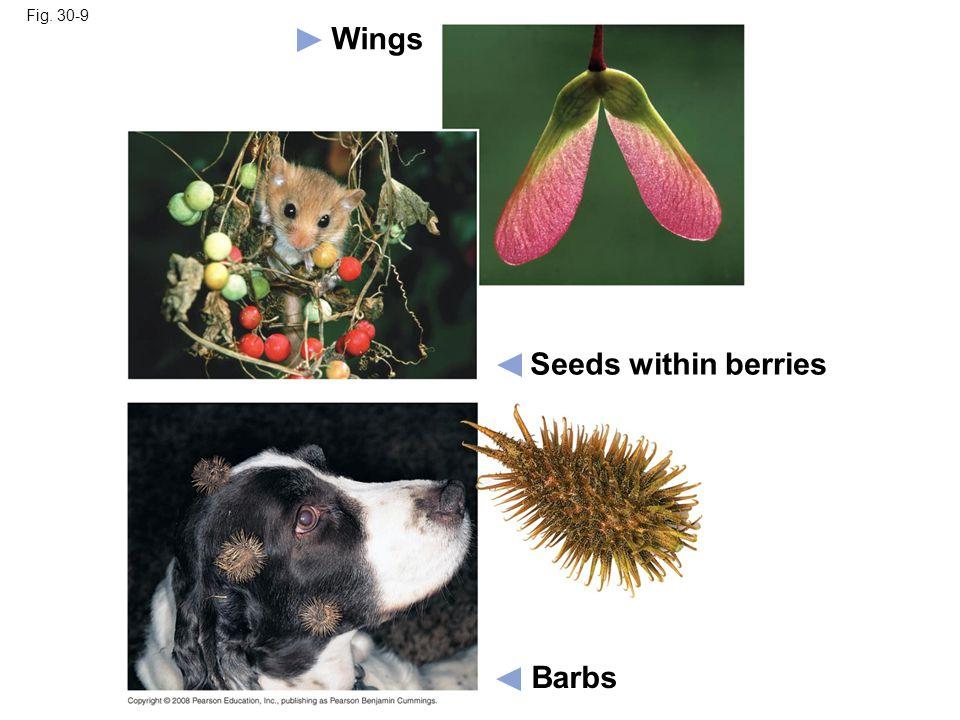 Fig. 30-9 Barbs Seeds within berries Wings