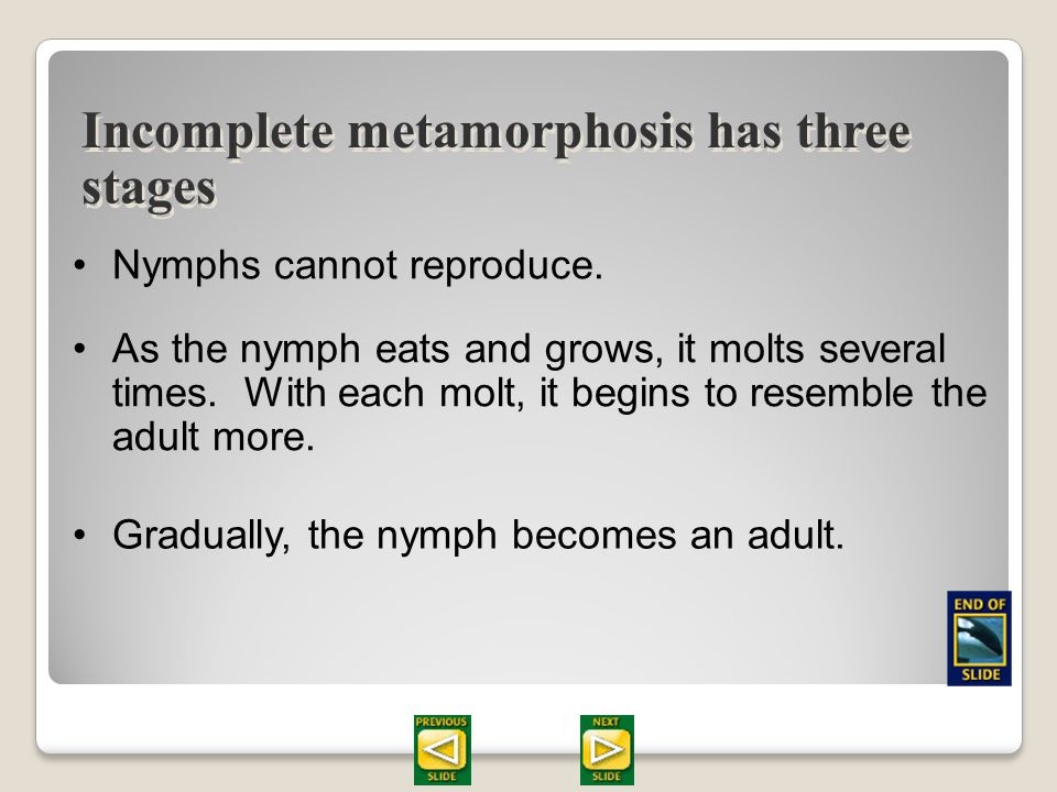 Section 28.2 Summary – pages 747 - 755 Incomplete metamorphosis has three stages A nymph, which hatches from an egg, has the same general appearance a