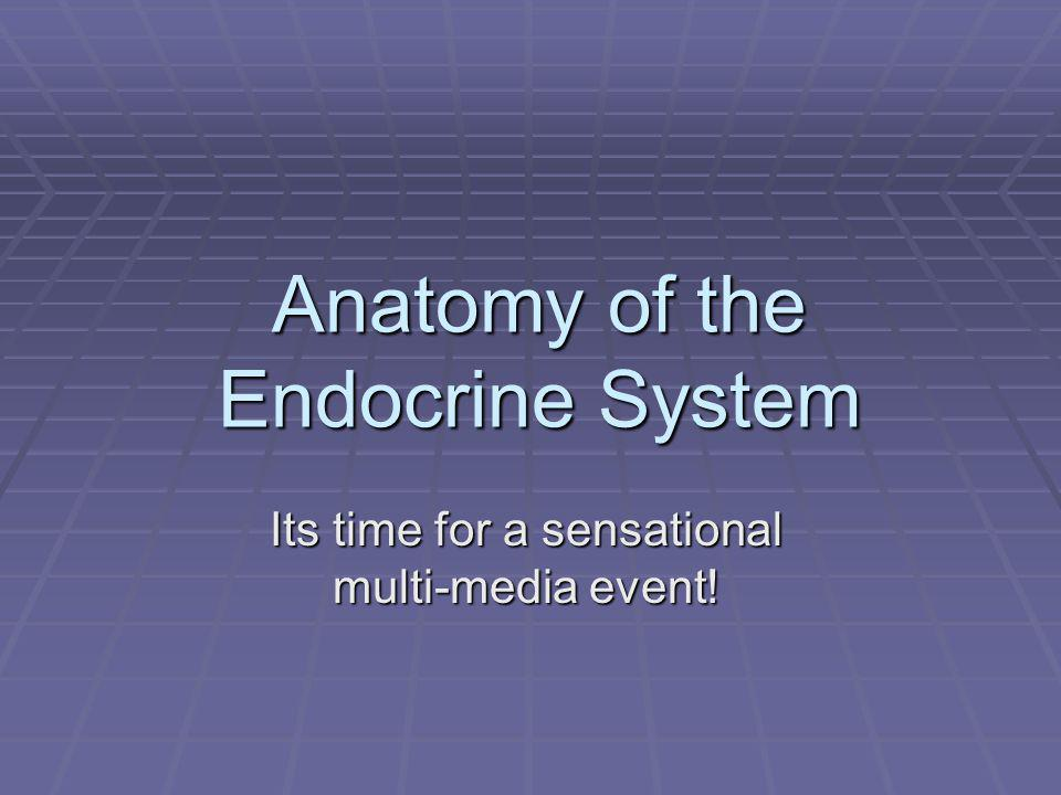 Anatomy of the Endocrine System Its time for a sensational multi-media event!