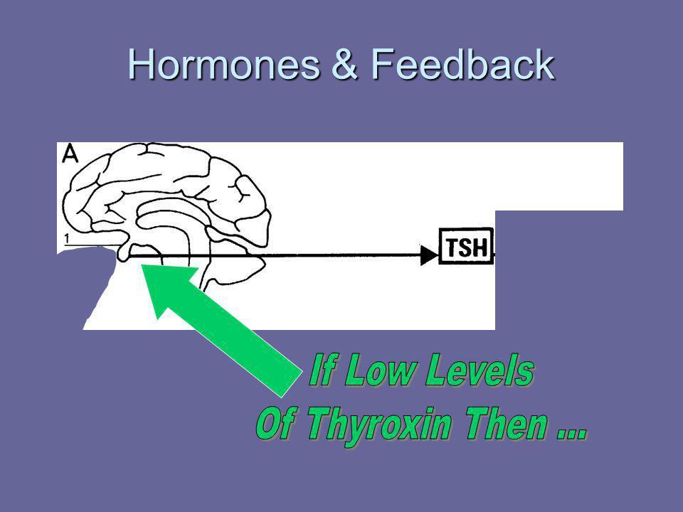 Hormones & Feedback