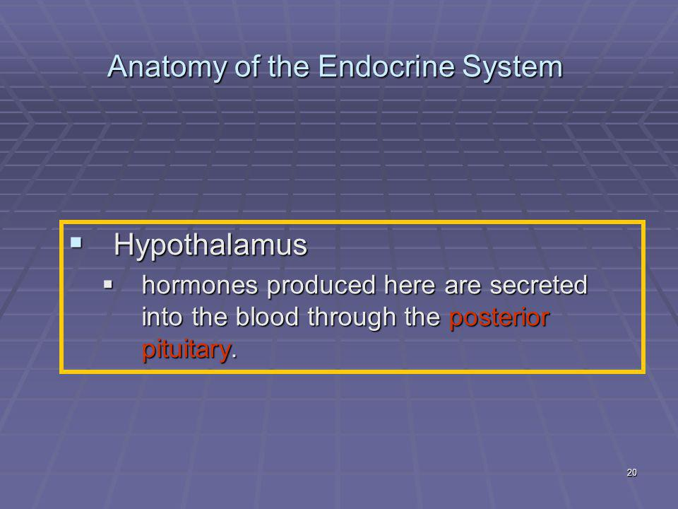 20 Anatomy of the Endocrine System  Hypothalamus  hormones produced here are secreted into the blood through the posterior pituitary.
