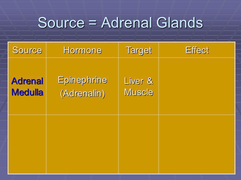 89 Source = Adrenal Glands SourceHormoneTargetEffect Adrenal Medulla Epinephrine(Adrenalin) Liver & Muscle