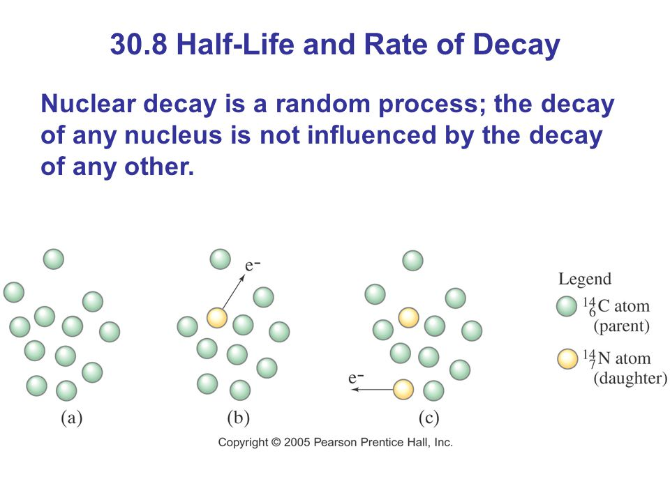 30.8 Half-Life and Rate of Decay Nuclear decay is a random process; the decay of any nucleus is not influenced by the decay of any other.