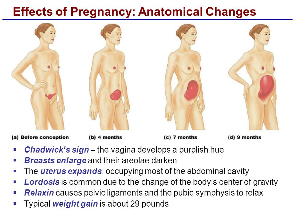 Effects of Pregnancy: Anatomical Changes  Chadwick's sign – the vagina develops a purplish hue  Breasts enlarge and their areolae darken  The uteru