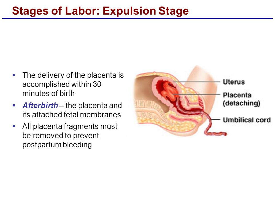 Stages of Labor: Expulsion Stage  The delivery of the placenta is accomplished within 30 minutes of birth  Afterbirth – the placenta and its attached fetal membranes  All placenta fragments must be removed to prevent postpartum bleeding