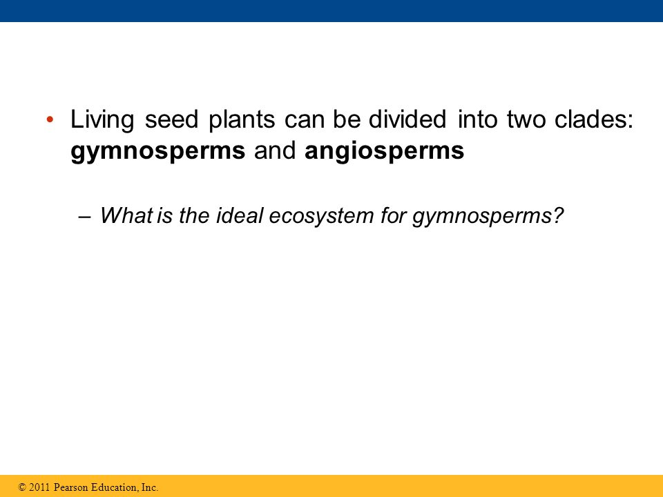 Living seed plants can be divided into two clades: gymnosperms and angiosperms –What is the ideal ecosystem for gymnosperms? © 2011 Pearson Education,