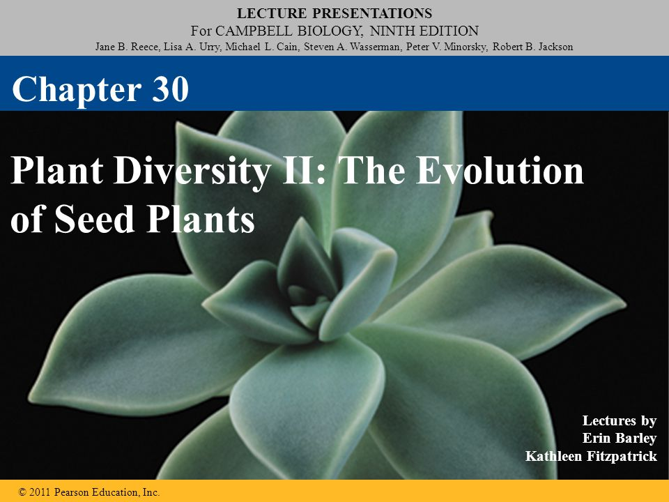 © 2011 Pearson Education, Inc. REPEAT : Seed Development Right-click slide / select Play