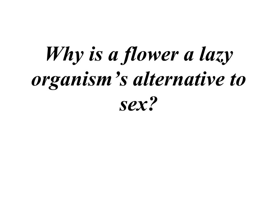 Why is a flower a lazy organism's alternative to sex?