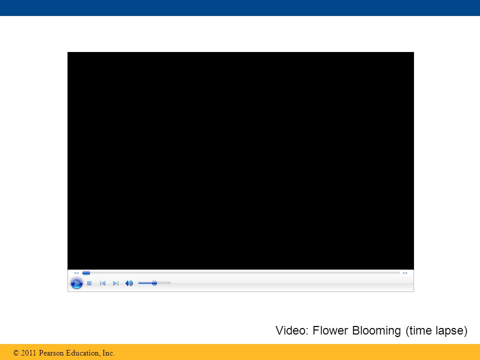 © 2011 Pearson Education, Inc. Video: Flower Blooming (time lapse)