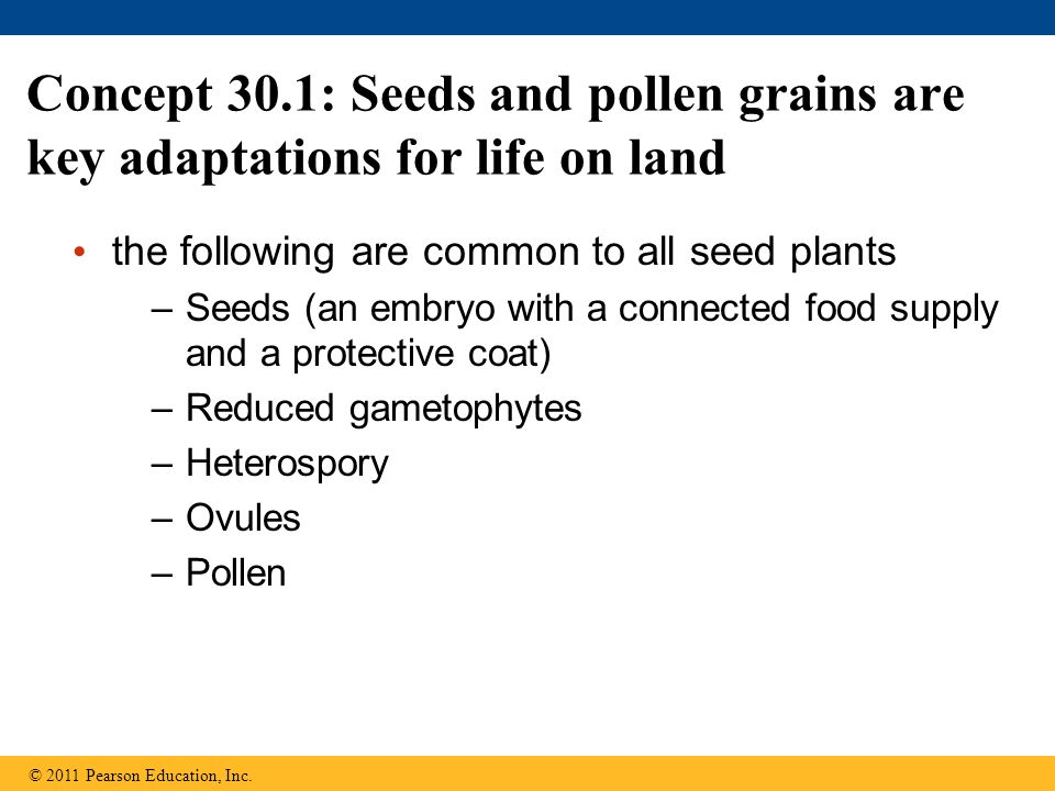 Concept 30.1: Seeds and pollen grains are key adaptations for life on land the following are common to all seed plants –Seeds (an embryo with a connec