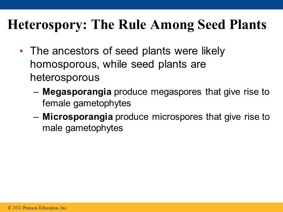 Figure 30.UN01 Nonvascular plants (bryophytes) Seedless vascular plants Gymnosperms Angiosperms